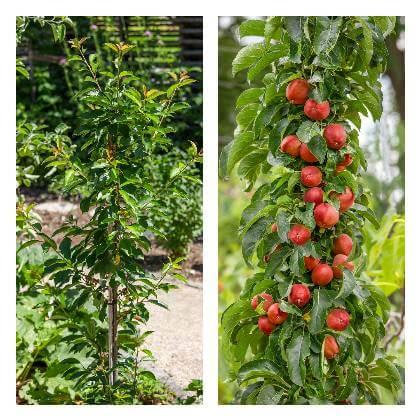 Ovocné stromy do okrasné zahrady