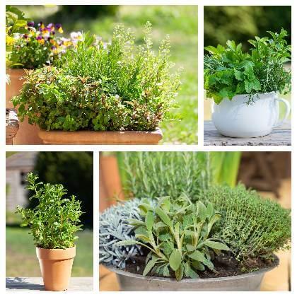 Bylinky pěstování