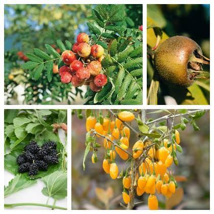 Plody netradičního ovoce