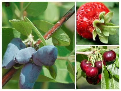 První plody v zahradě