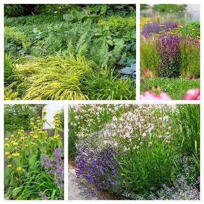 Okrasné zahradní rostliny