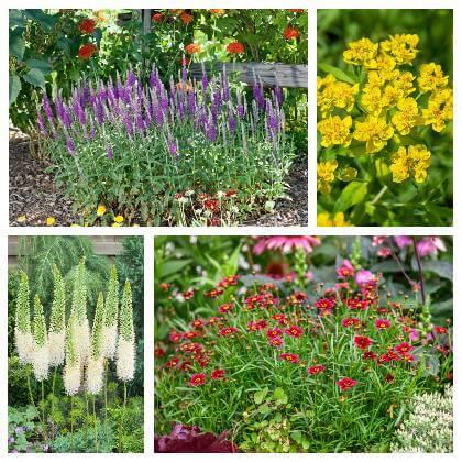 Rostliny na slunné stanoviště