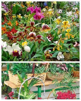 Pokojové rostliny na balkoně