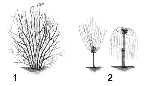 Řez a prosvětlování dřevin