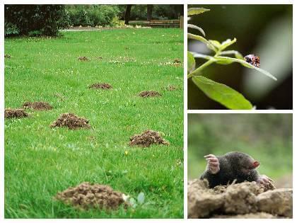 Škůdci v zahradě