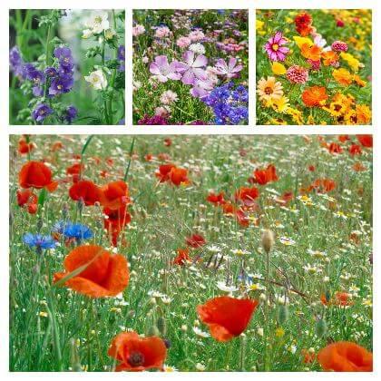 Louka plná květů