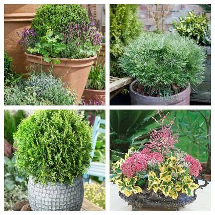 Vhodné rostliny na balkon