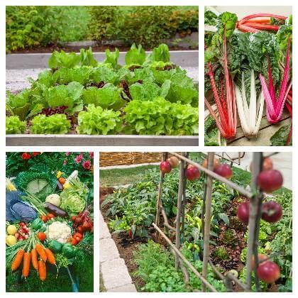 Jakou zeleninu pěstovat ve stínu