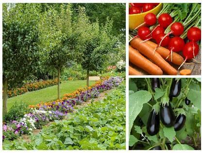 Zeleninová zahrada v srpnu