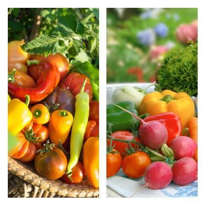 Zeleninová zahrada v červenci