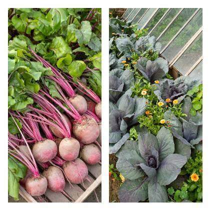 Zeleninová zahrada v červnu