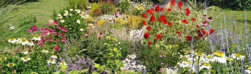 Dlouho kvetoucí trvalky