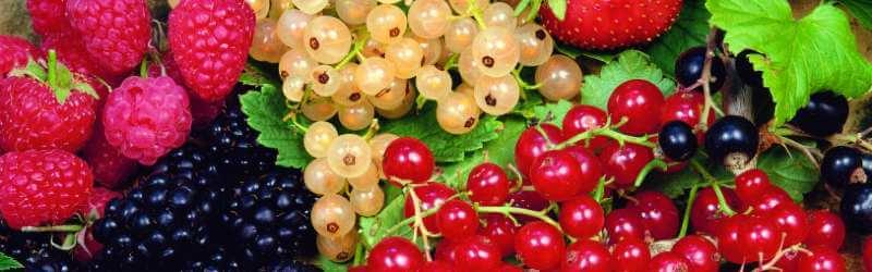 Drobné ovoce na zahradě