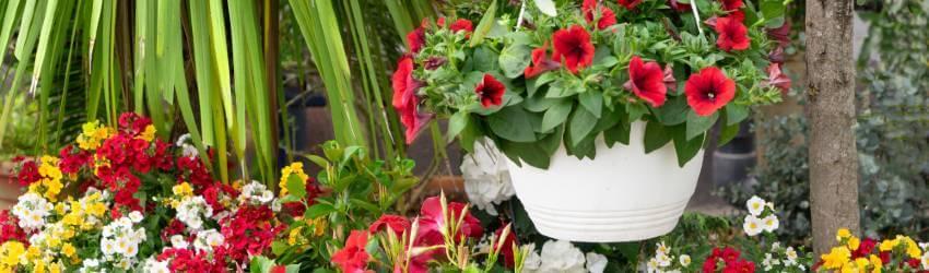 Exotické rostliny na balkóny a terasy