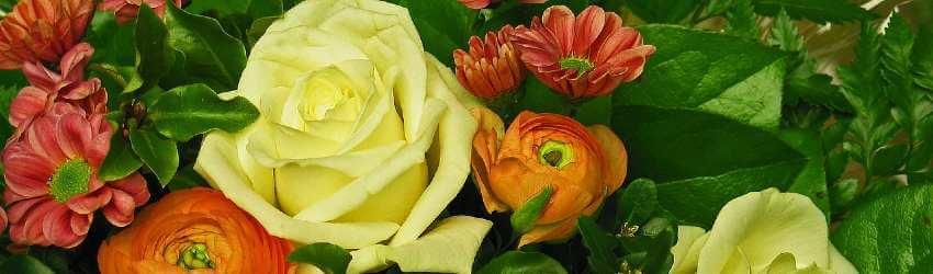 S čím kombinovat růže