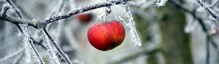 Ochrana ovocných stromů