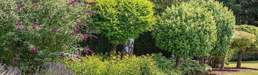 Okrasné rostliny na zahradu