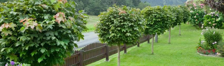 Okrasné stromy do malých zahrad