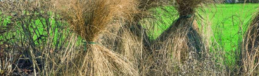 Okrasné trávy zazimování