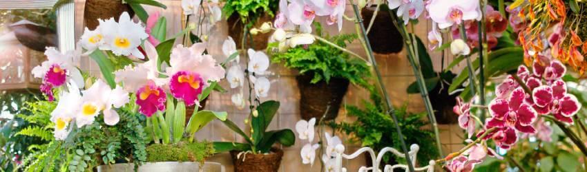 Orchidej rozmnožování