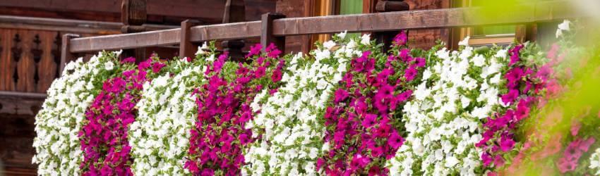 Pěstování v samozavlažovacích truhlících
