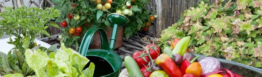 Zelenina na balkoně