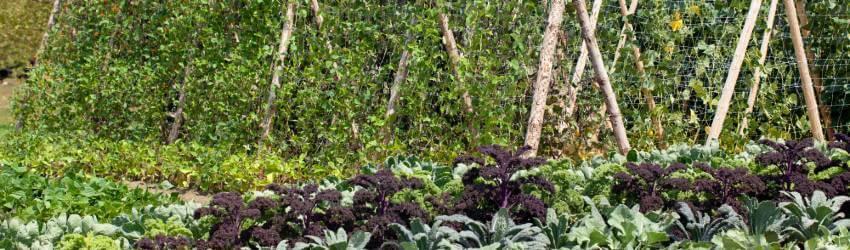 Pěstování zeleniny ve stínu