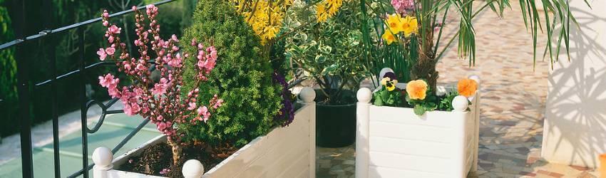 Pěstování a zazimování rostlin na balkoně