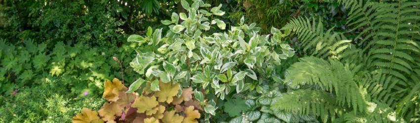 Rostliny do stínu
