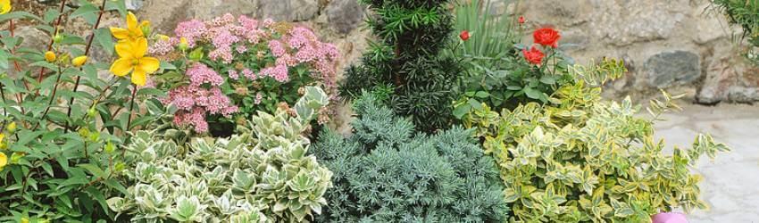 Rostliny na balkon v zimě