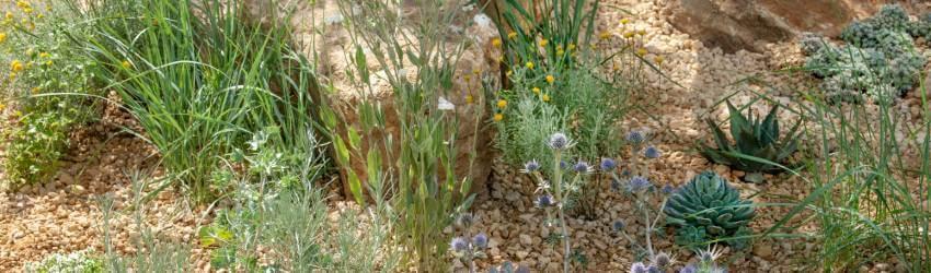 Jak pěstovat skalničky