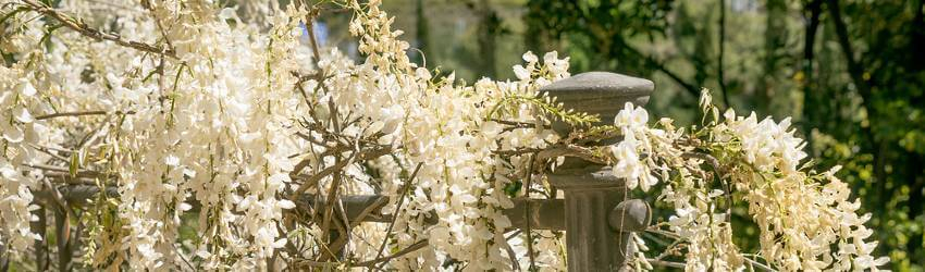 Péče o popínavé rostliny