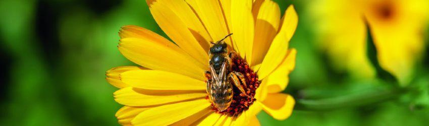 Trvalky pro včely