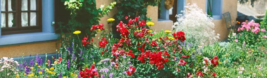 Vintage zahrada