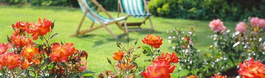Zahrada v srpnu