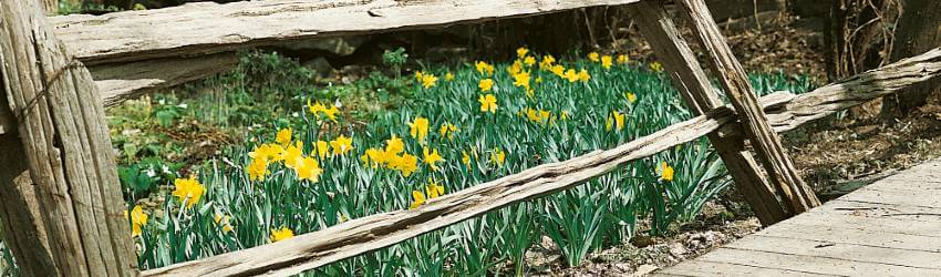 Zahrada v květnu