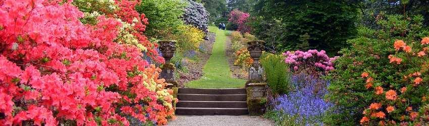 Keře do zahrady