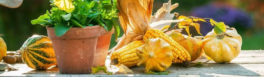 Sklizeň zeleniny a ovoce