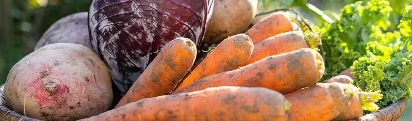 Teplomilná zelenina na podzim