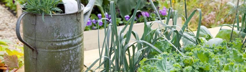 Zelenina v zahradě