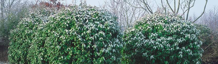 Zimní variace v zahradě