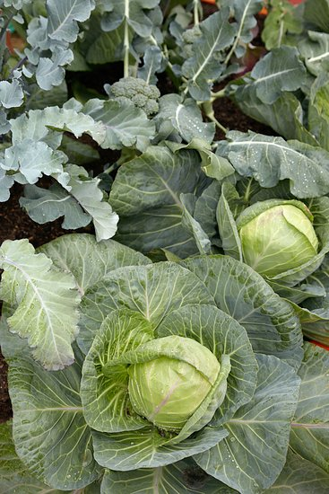 Zelenina dokáže růst i ve stínu