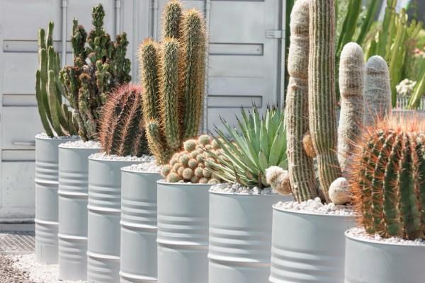Letnění rostlin na balkoně a terase