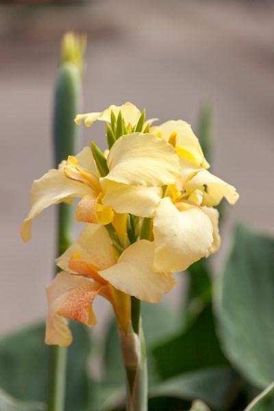 Tipy na měsíc květen