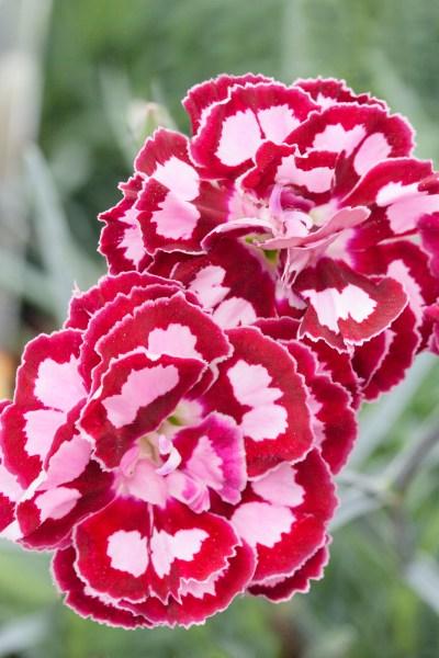 Červenec v okrasné zahradě