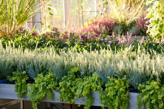 Říjnová zahrada