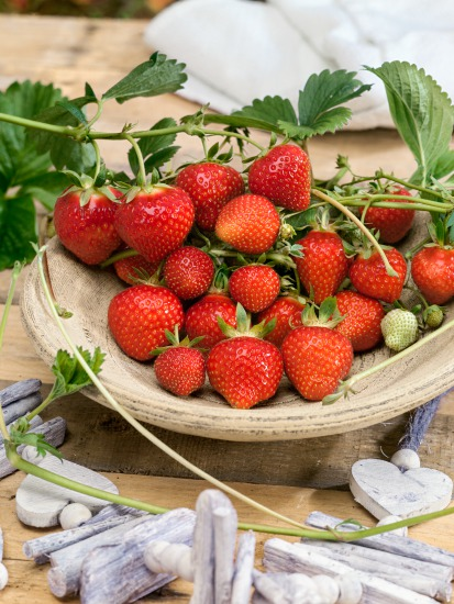 Péče o jahody během roku