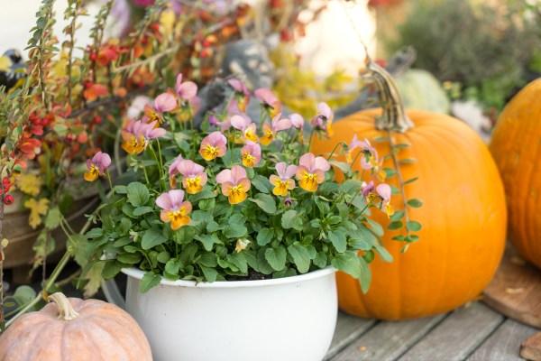 Podzimní dekorace na balkoně