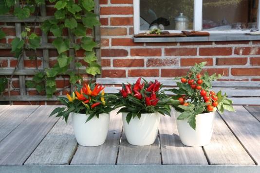 Balkon pro potěšení - vzácná zelenina z květináče