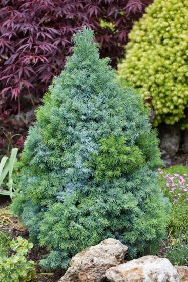 Dekorativní stromy a keře pro oživení zahrady
